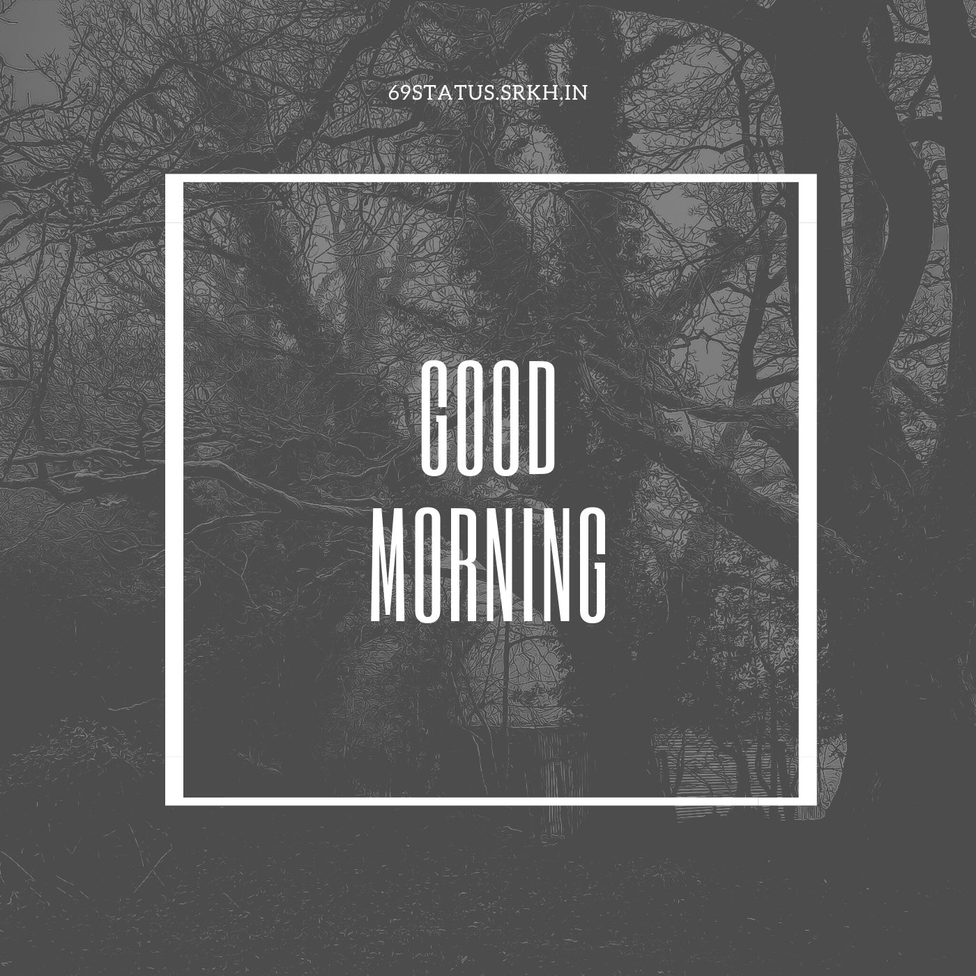 Good Morning forest pic full HD free download.