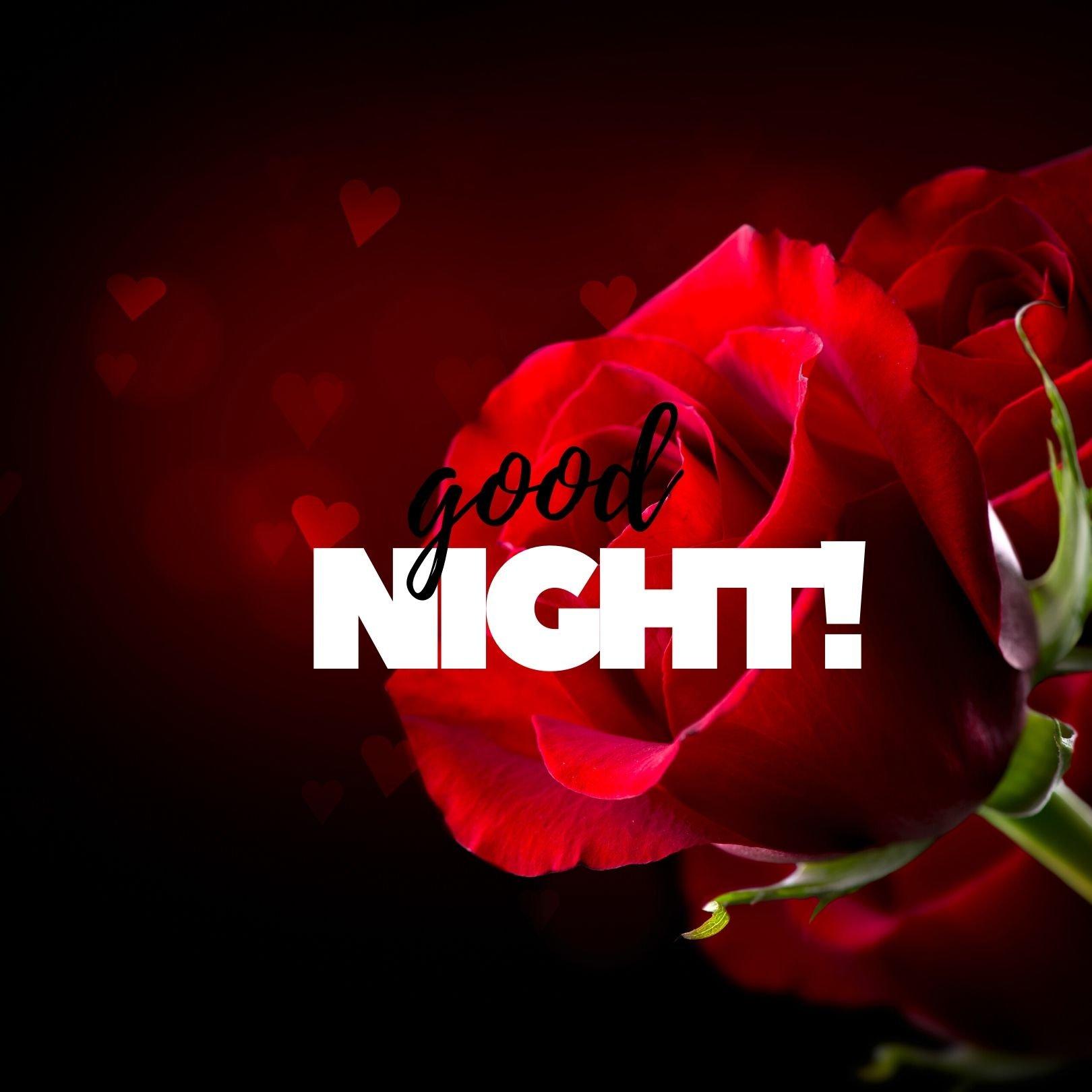 Good Night flower ros image full HD free download.