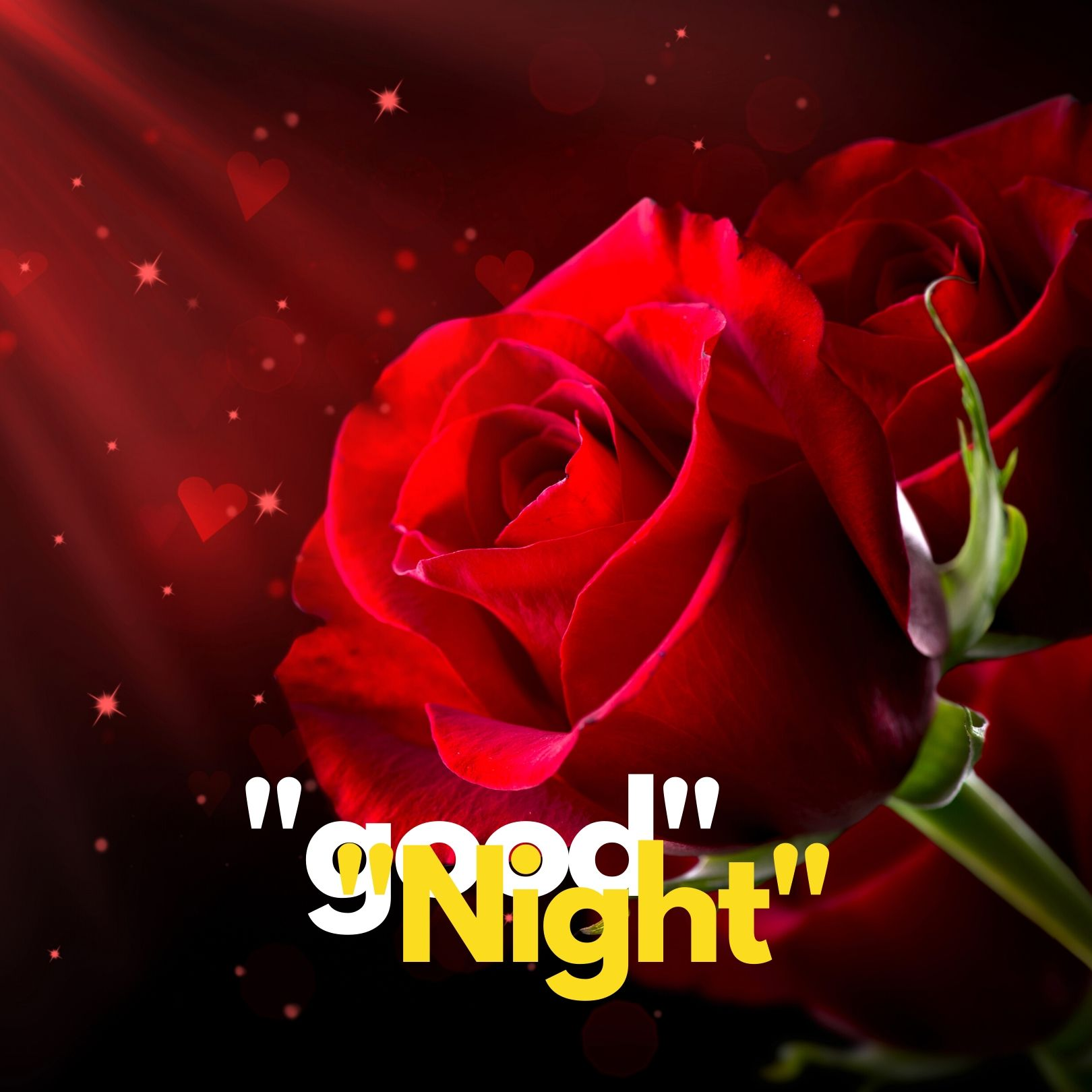 Good Night rose pic hd