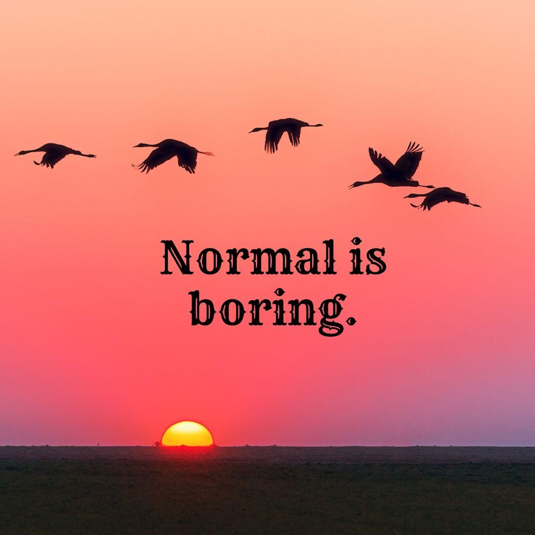Normal is Boring Image Dp full HD free download.