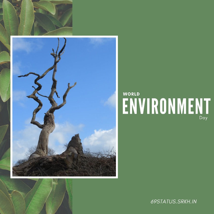 World Environment Day Related Images full HD free download.