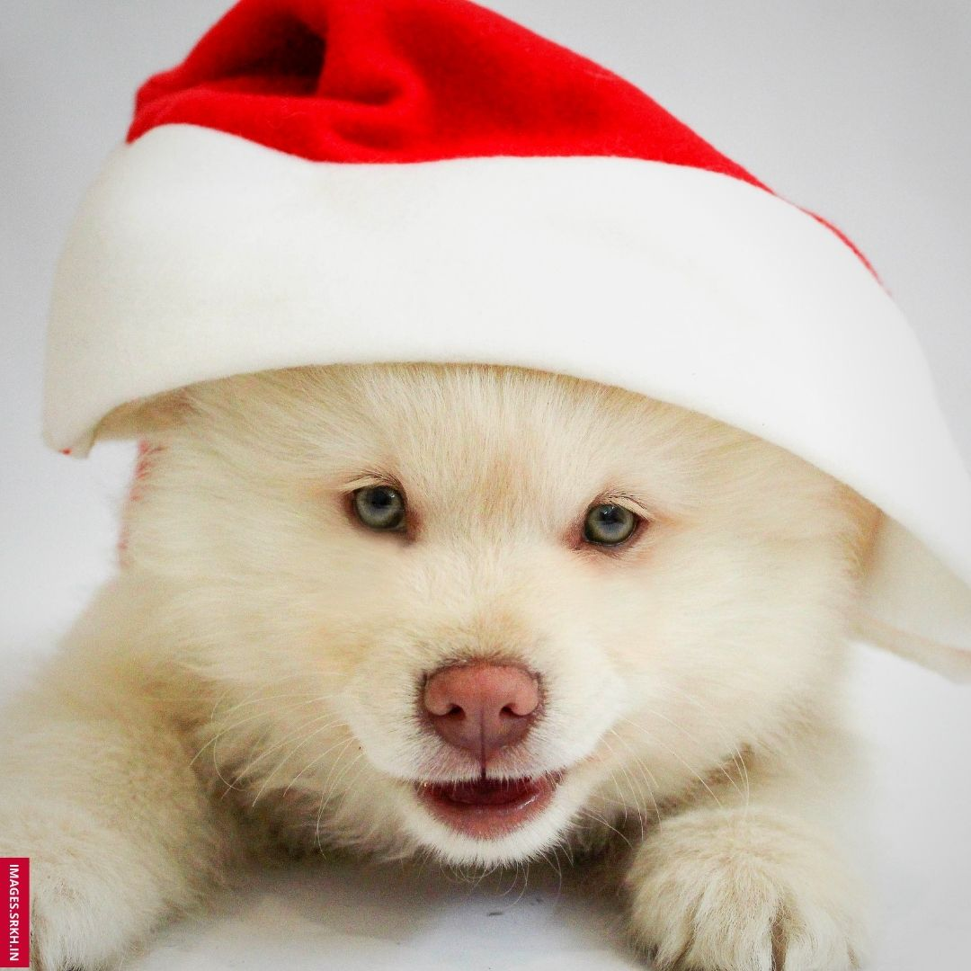 Christmas Dp Images